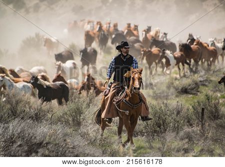 May 1, 2016 Craig, CO: Cowboy wrangler with black hat and sorrel horse herding horse herd at a gallop during annual Sombrero Ranch horse drive