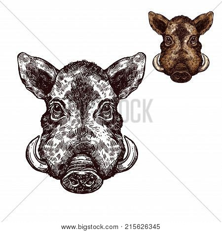 Boar wild animal sketch vector icon. Muzzle head of wild aper swine or pig hog symbol for wildlife fauna and zoology or hunting sport team trophy and nature zoo adventure club