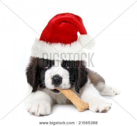 Christmas Santa Clause Saint Bernard Puppy