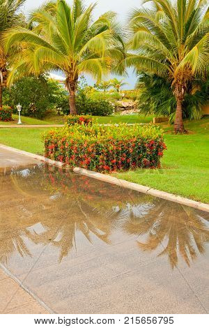 flowered garden with palm trees after a thunderstorm at Varadero Cuba
