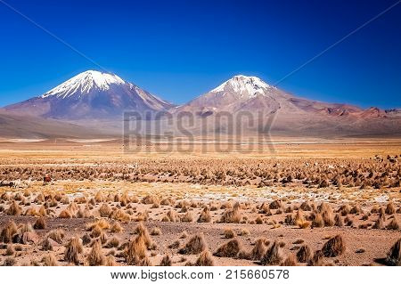 Enormous volcano Nevado Sajama and Parinacota volcanoes located in National Parks in Chile and Bolivia