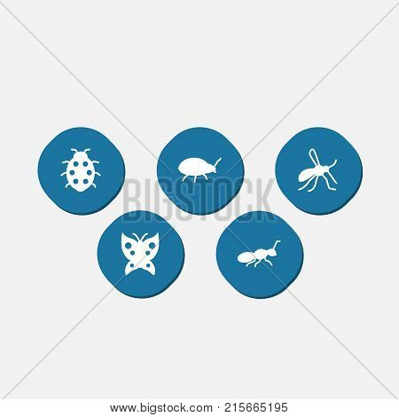 Collection Of Gnat, Beetle, Monarch And Other Elements.  Set Of 5 Zoo Icons Set.