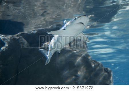 a wild shark shot in the dark sea