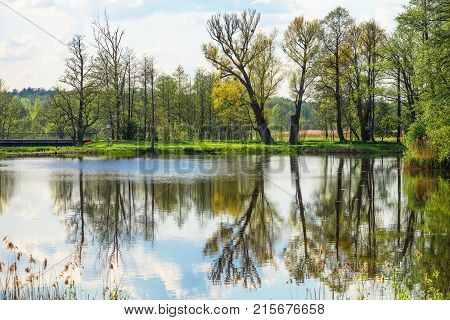 Trees and sky reflection at a pond at Bialowieza National Park as a part of the Belovezhskaya Pushcha National Park in Poland.