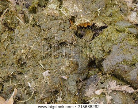 Horse dung close-up for background, detailed, on the dirt horseback trails through trees on the Yellow Fork and Rose Canyon Trails in Oquirrh Mountains on the Wasatch Front in Salt Lake County Utah USA.