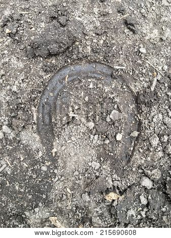 The trace of the hoof of a horse, close up, detailed, on the dirt horseback trails through trees on the Yellow Fork and Rose Canyon Trails in Oquirrh Mountains on the Wasatch Front in Salt Lake County Utah USA.