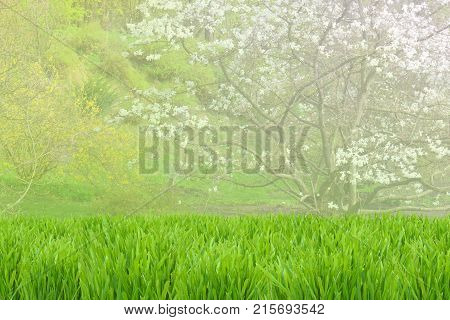 Green Beautiful Blossom Spring Background. Grass And Trees