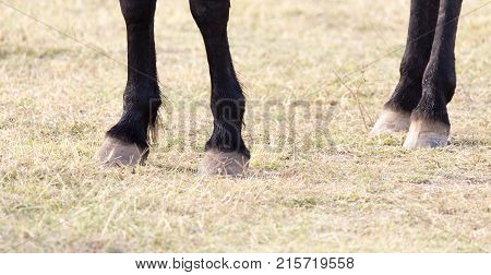 the horse's hooves on the nature . In the park in nature