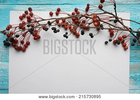 White background with branches with small apples and black Privet berry,  close-up, Top view