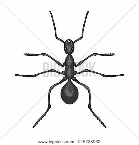 Insect ant single icon in monochrome style for design.Pest Control Service vector symbol stock illustration .