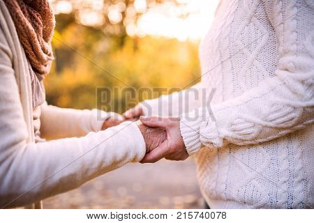 Unrecognizable senior women on a walk in autumn nature. Senior woman holding hands of her elderly mother.