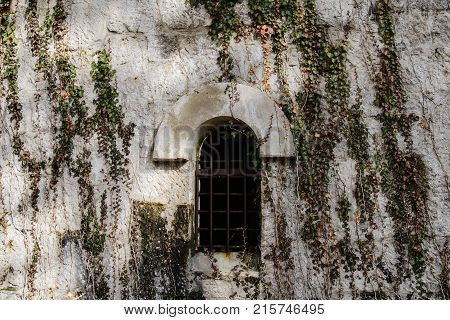 Window of the house in beautiful thickets in the texture wall