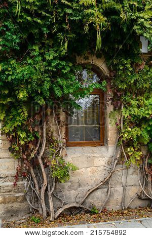 Window of the house outside in the wall in the thickets