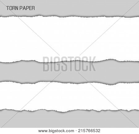 Torn paper stripe with ragged uneven ragged edges of white lines paper. Vector illustration with two different sized stripes isolated on gray background