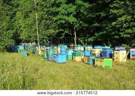 Colorful Beehives for Honey Bee Raw Linden Honey. Apiculture beekeeping.
