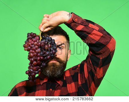 Man With Beard Holds Bunch Of Grapes Isolated On Green