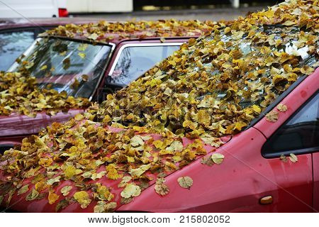 autumn yellow leaves on the hood and windshield of the car