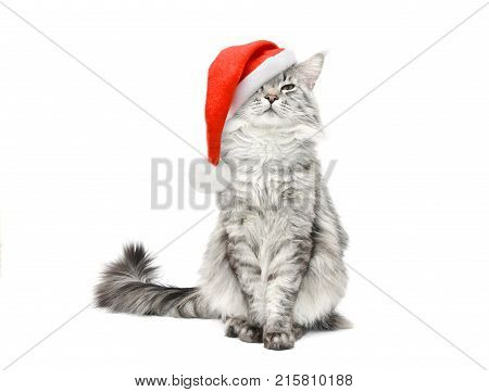 Grey cat in Santa Christmas red hat on white background