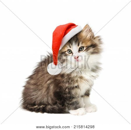 Small kitten in Santa Christmas red hat on white background