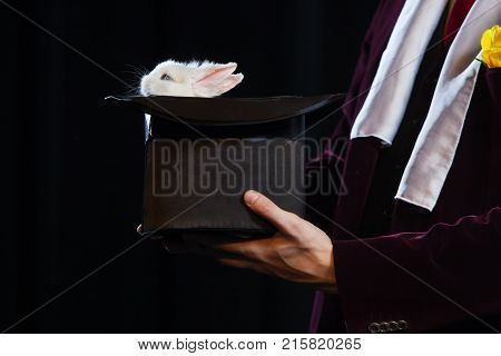 Little rabbit in a magician hat on a black background.