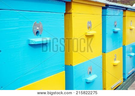 Close up of colorful yellow and blue bee hives in a row in the apiary Apiculture Beekeeping bee yard. Honey bee colonies commonly in man-made hives