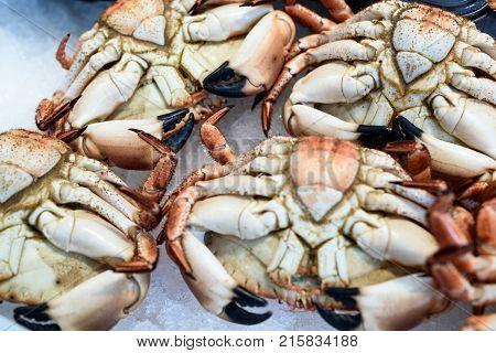 Fresh English Seafood Crabs At Market Display