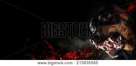 Ferocious Rottweiler barking mad on black background. poster