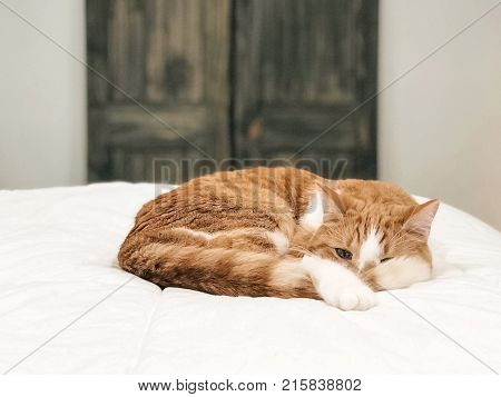 tabby cat sleeping on white duvet on bed