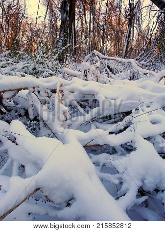 Snow covered forest scenery of Allerton Park in central Illinois
