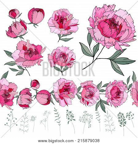 Set With Different Peonies On White. Herbs, Plants And Flowers On White Background