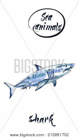Watercolor shark on the white background. Watercolor shark sketch hand drawn watercolor illustration
