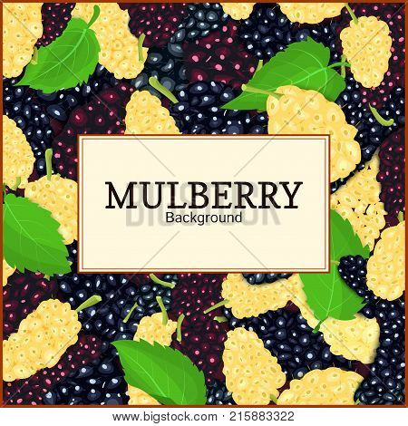 Square frame and label on ripe mulberry berry and leaves background. Vector card illustration. Mulberry beries fresh and juicy frame for design of food packaging juice breakfast tea detox diet