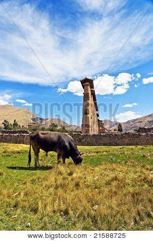 Ruins And Cow