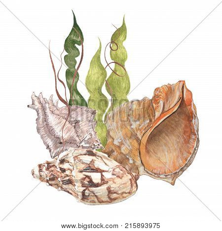 Watercolor gentle seashells. Delicate illustration of shells and compositions of them.
