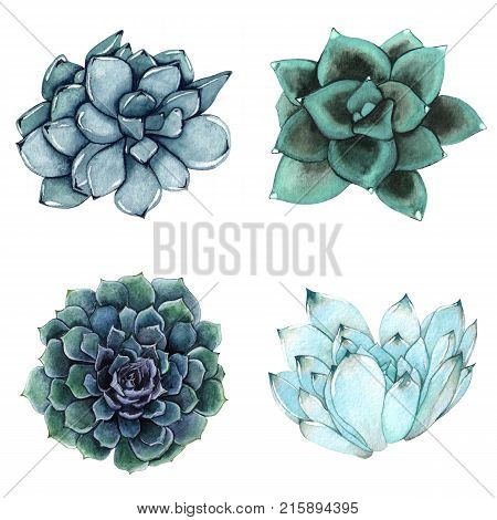 A set of watercolor compositions made of succulent flowers. Delicate watercolor succulents. A collection of colorful succulents.