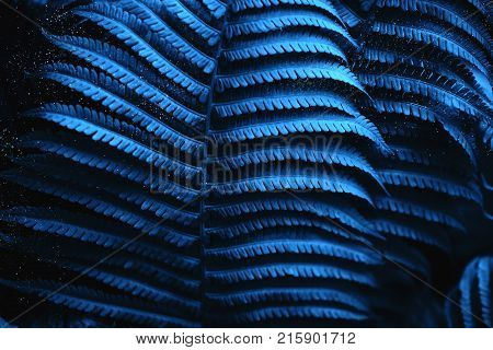 Beautiful background made with young fern leaves. Blue toning of the picture. Miracle concept.