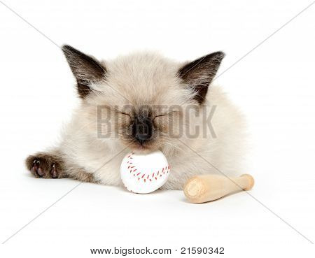 Cute baby cat sleeping with toy baseball and bat on white background poster