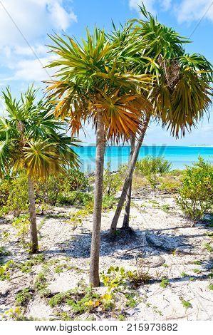 Cayo largo beach Cuba wtih palms and sun