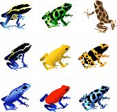 "A collection of 9 different species of poison dart frogs.  D. tinctorius ""French Guiana Cobalt"", D. auratus ""Costa Rican Green and Black"", D. auratus ""Kahlua and Cream"", D. Tinctorius ""Dyeing Poison Frog"", P. Terrib poster"