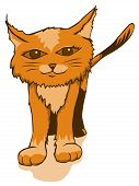 A cute orange kitty cat watches you poster