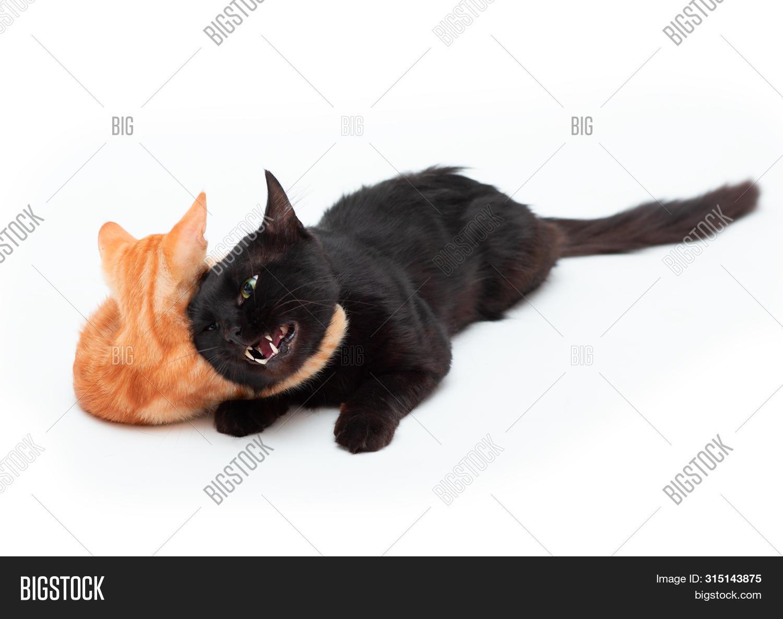 Red Striped Kitten Image Photo Free Trial Bigstock