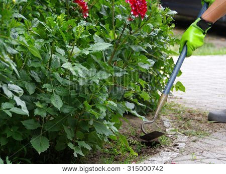 Weeding The Garden. Work At Removing Weeds In The Backyard. Plant Care.