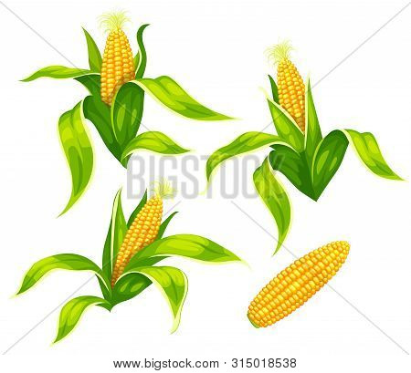 Set Of Maize Corncobs With Yellow Corns Ears And Green Leaves Set, Isolated On White Transparent Bac