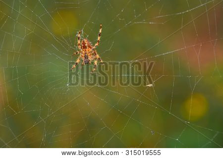 Spider In Its Fine Web; Waiting For A Dam