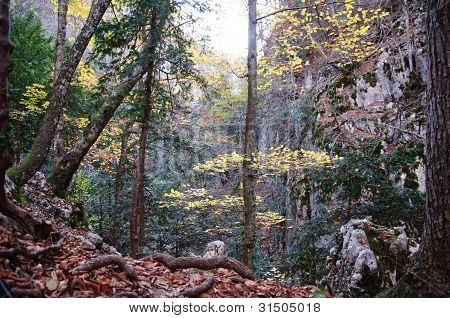 Mystical Autumn Forest Landscape