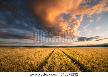 Fall. Autumn Landscape With Wheat Field. Beautiful Evening Sky With Clouds Illuminated With Red And