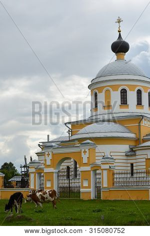 Yuryevo-devichye, Russia - July 07, 20197: Village Orthodox Church And Cows Grazing Nearby On The Gr