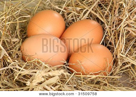 Fresh Freerange Eggs
