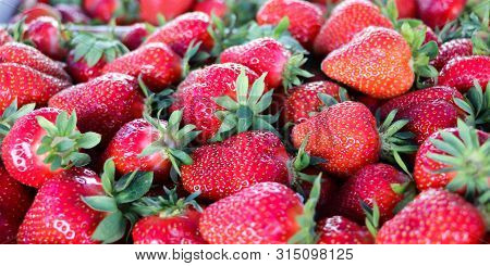 Fresh Strawberries From Serbia. Strawberry Field In The Village Of Kisac. Kisac Is Located In The Vo