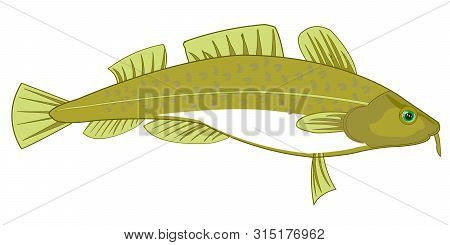 Fish Codfish On White Background Is Insulated